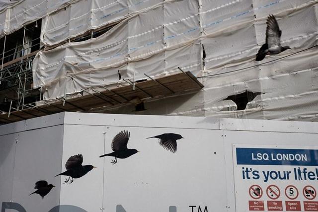Revoada de pássaros