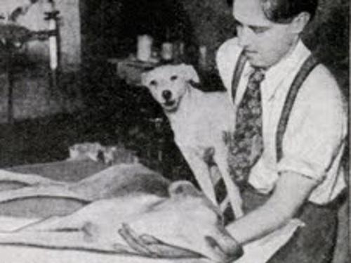 Cachorro ressuscitado