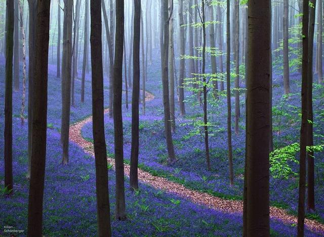 Floresta de Hallerbos