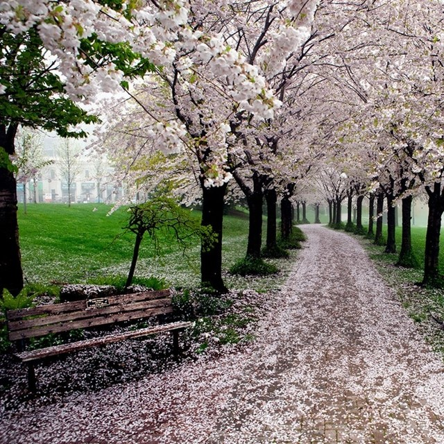 Parque Spencer Smith