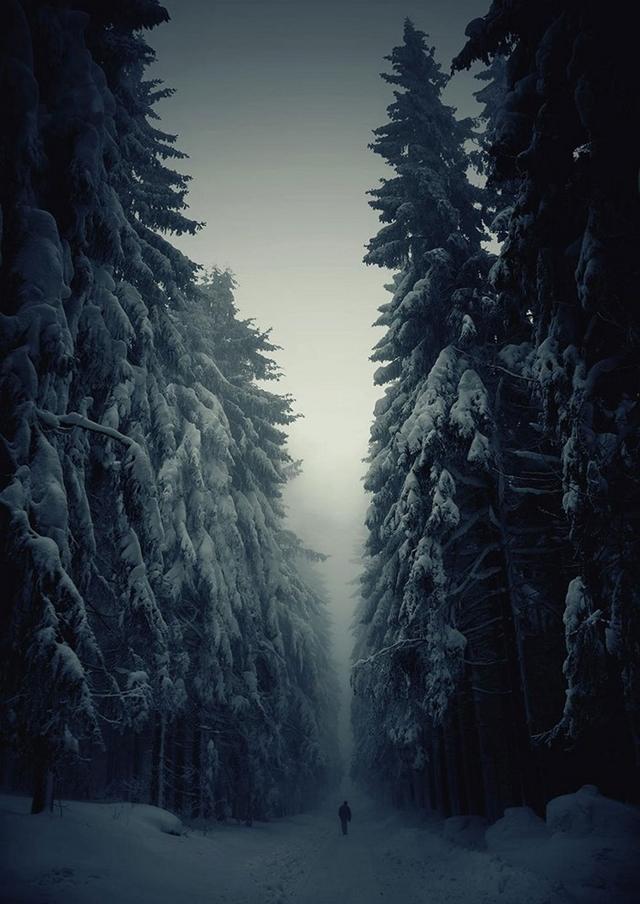 Trilha da Floresta Branca