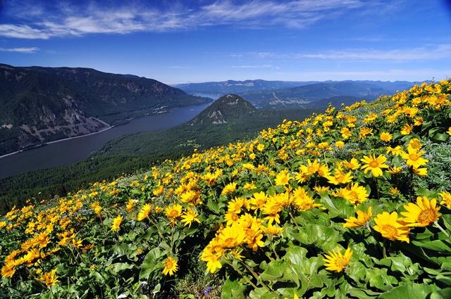 Dog Mountain, Estados Unidos