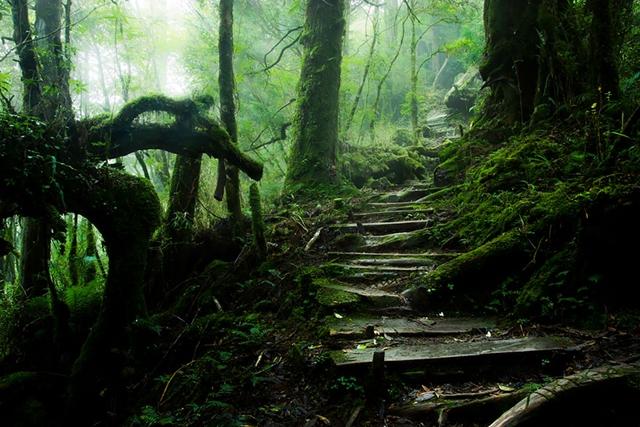 Montanha Taiping, em Taiwan