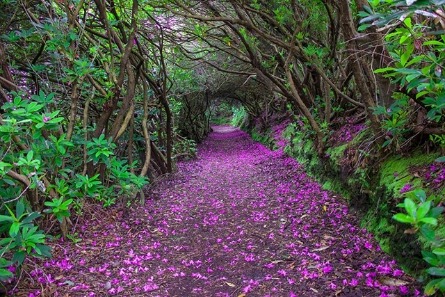 Parque Reenagross, na Irlanda
