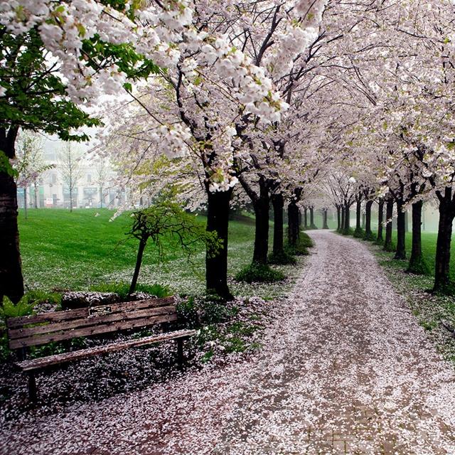 Parque Spencer Smith, Canadá
