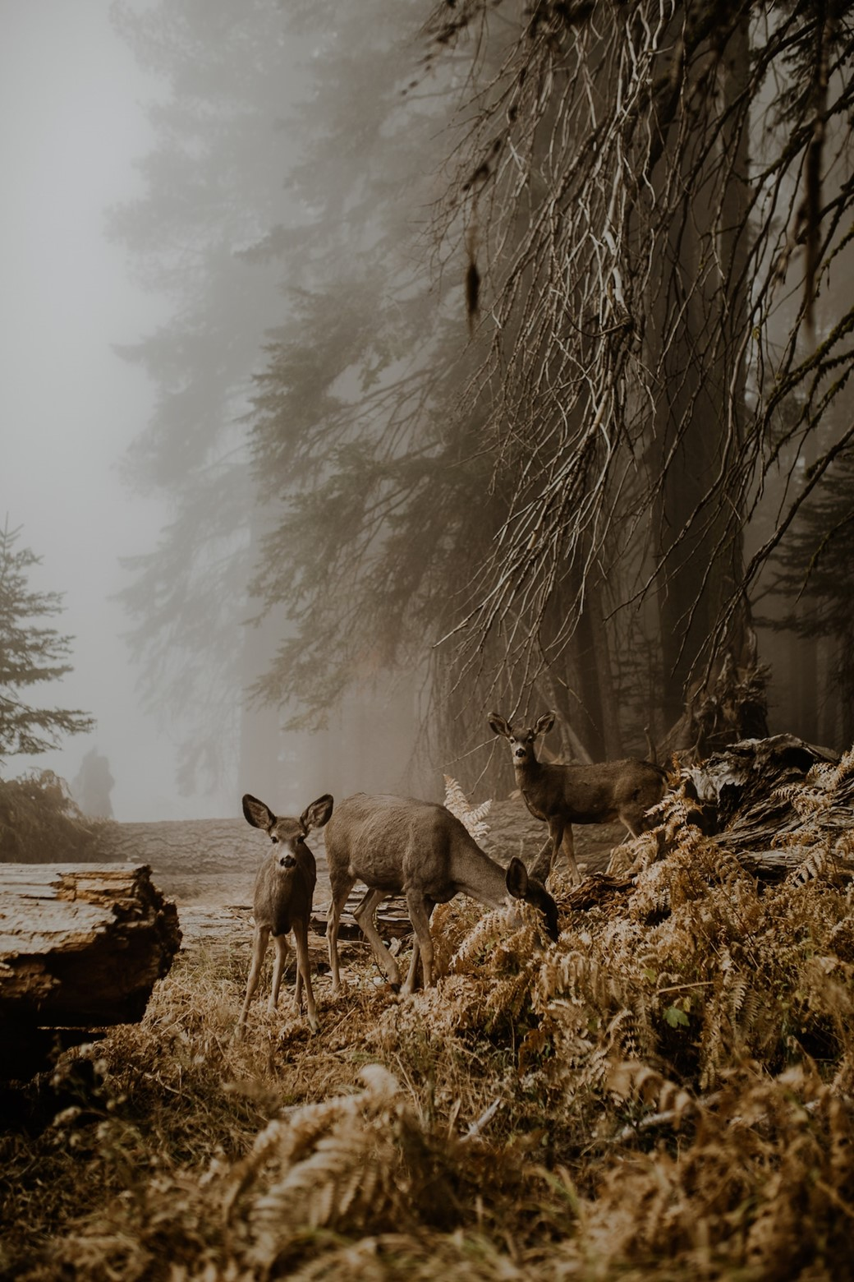 Cervos em uma floresta