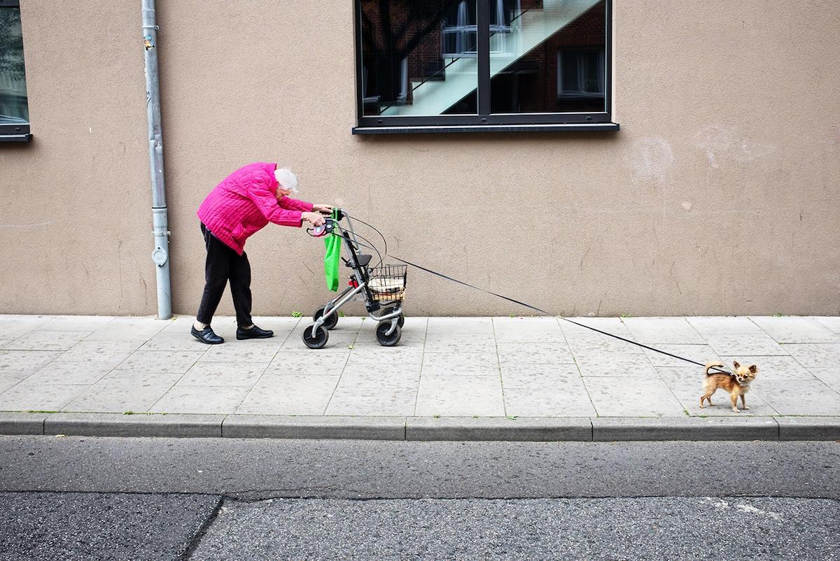 Idosa passeando com cão