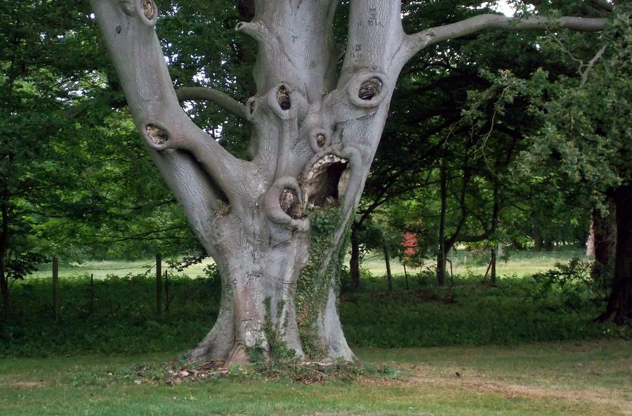 Árvore sinistra