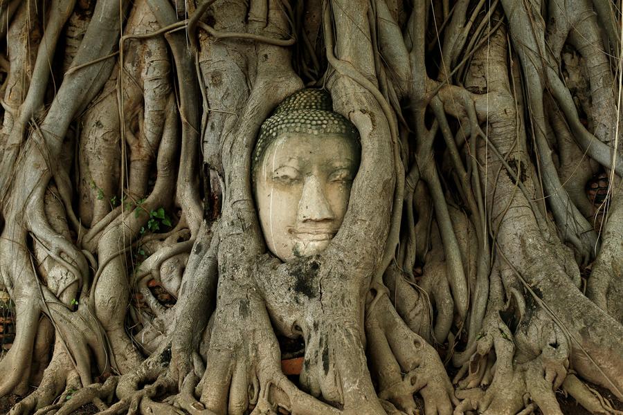 Buda no meio de árvore