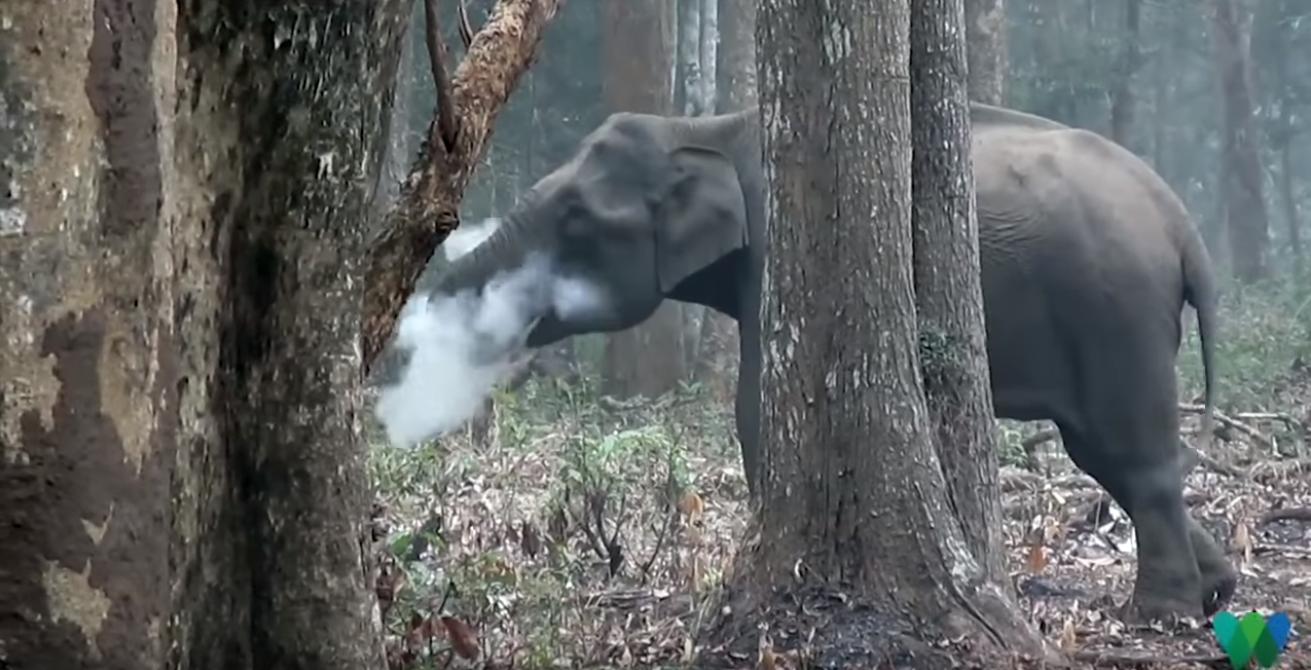 Elefante soltando fumaça
