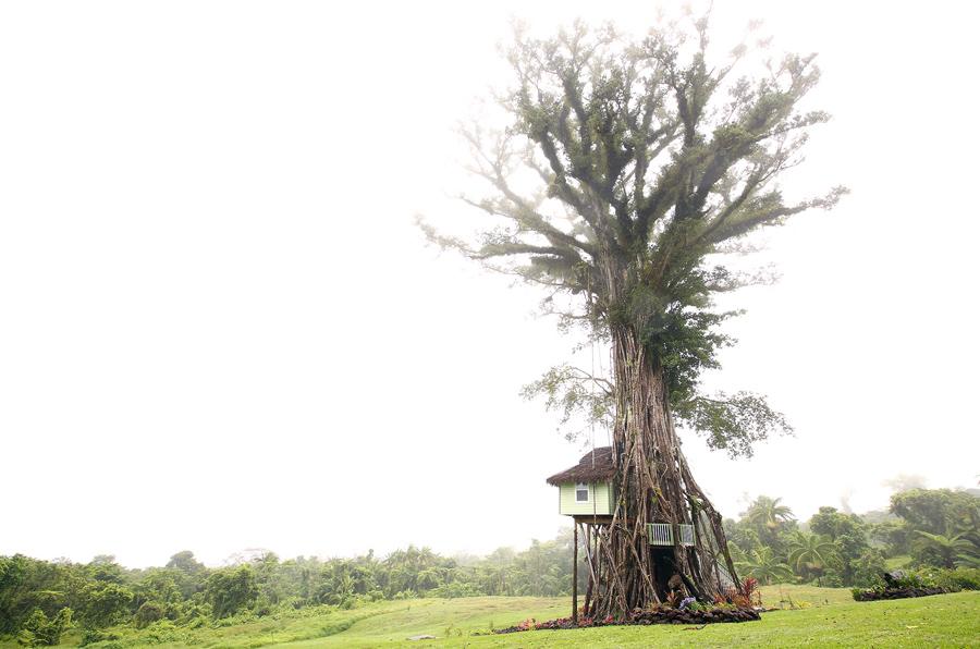 Hotel na árvore