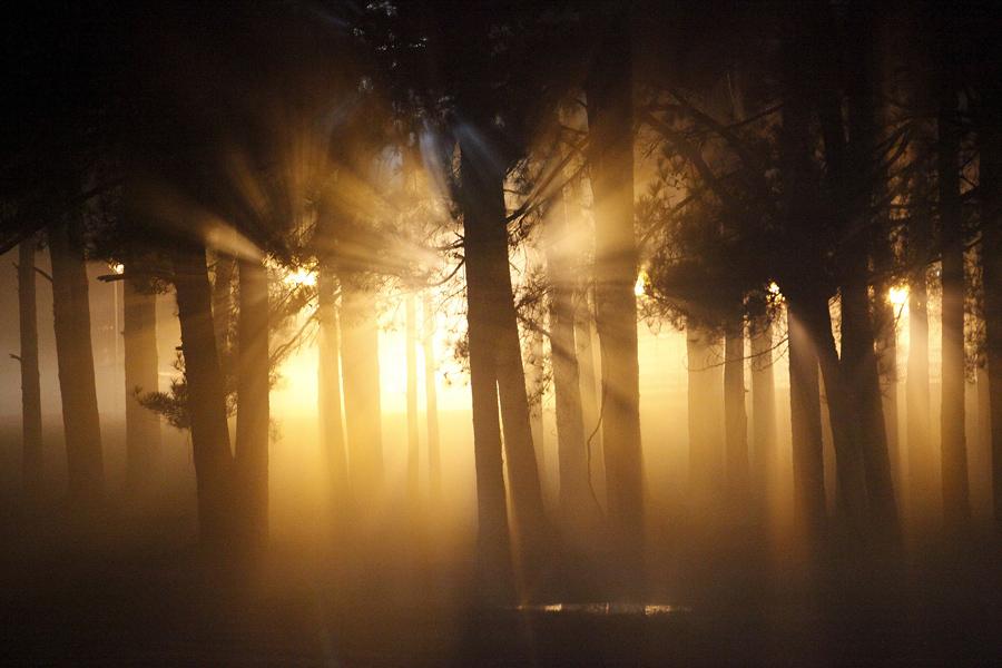 Silhuetas em um bosque