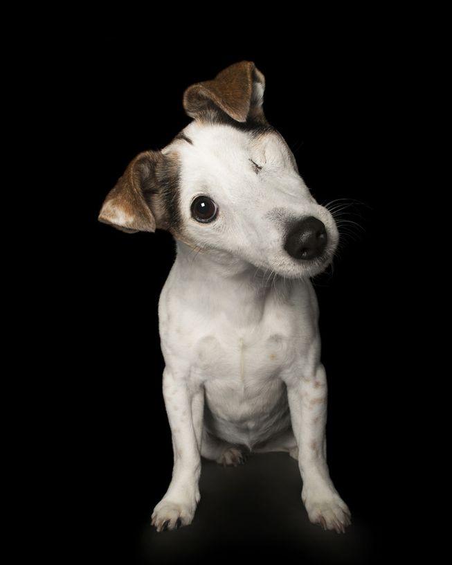 Cachorro com um olho