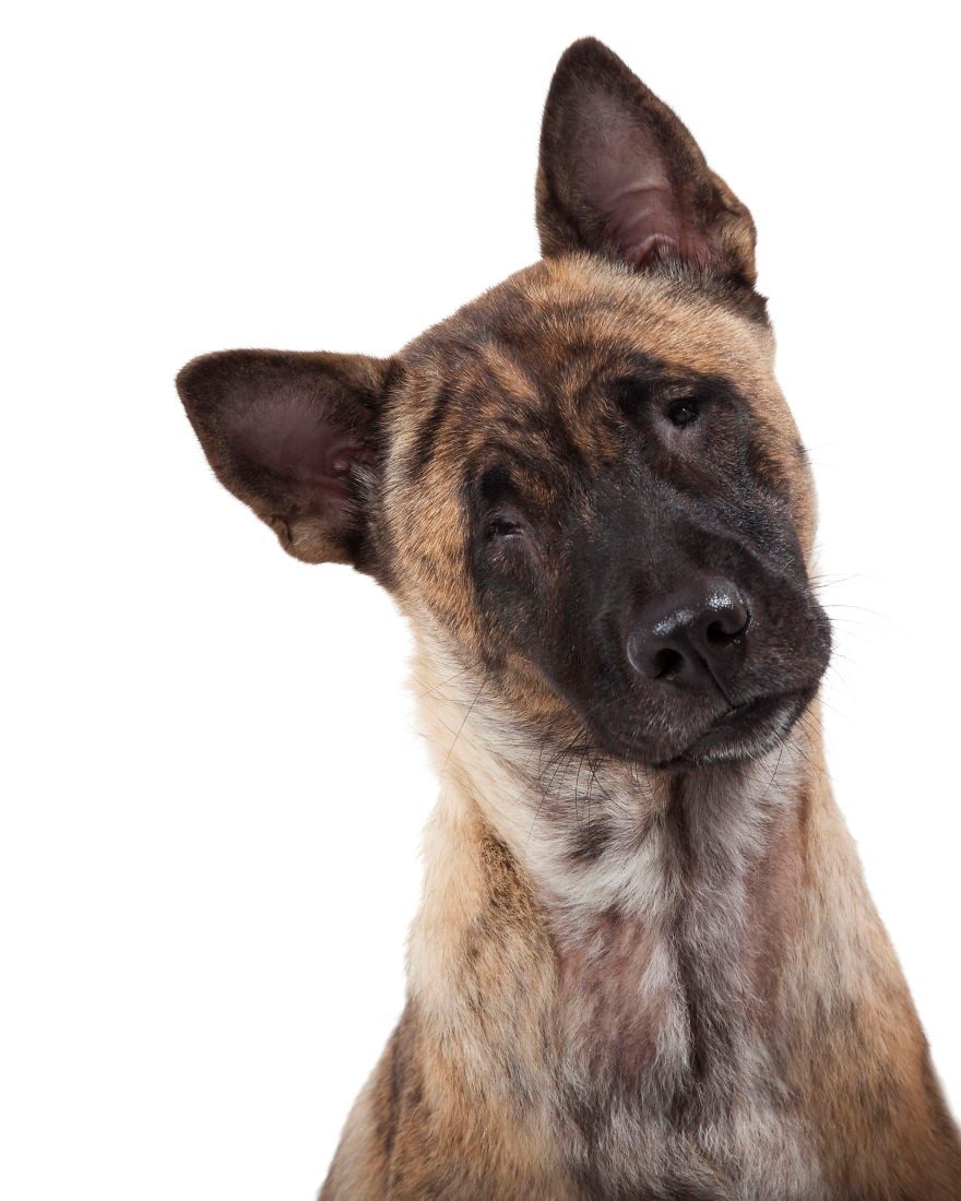 Cão aguardando adoção
