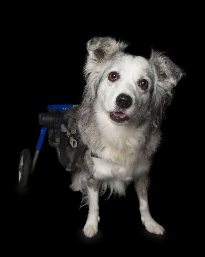Cão deficiente