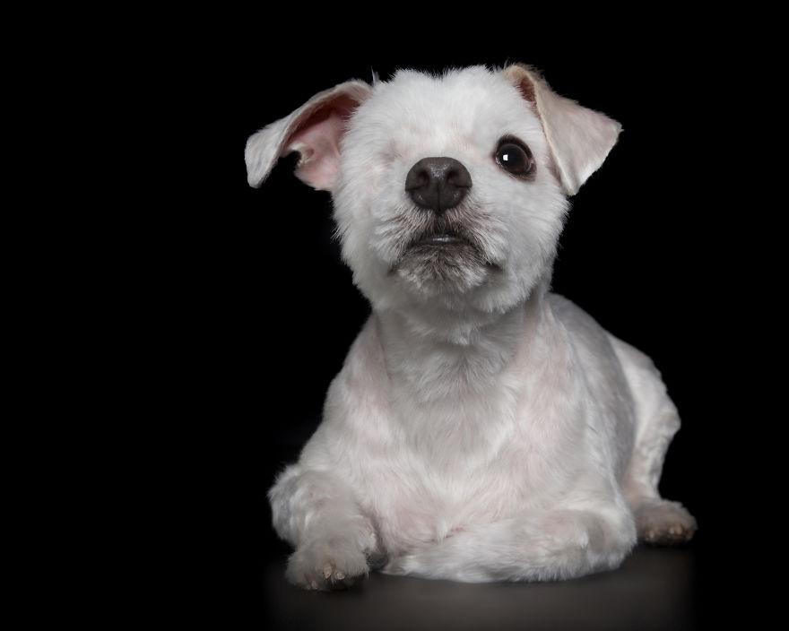 Cãozinho com um olho só