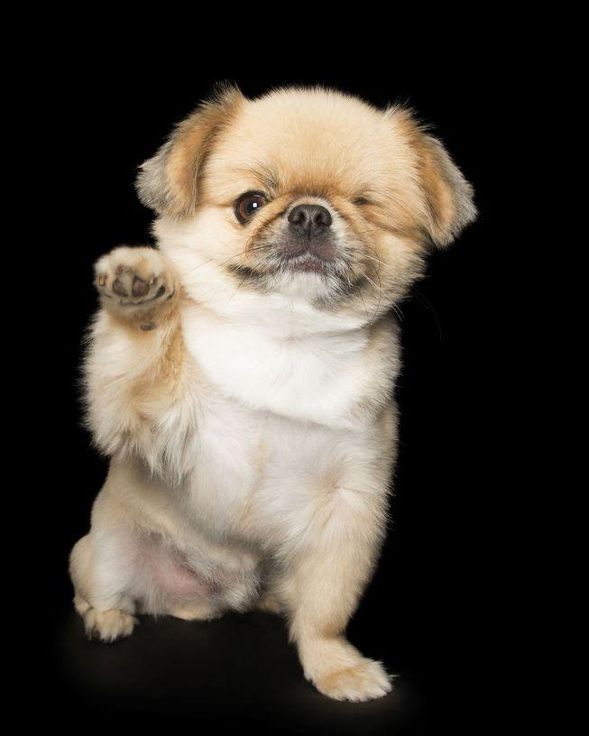 Cãozinho fofo