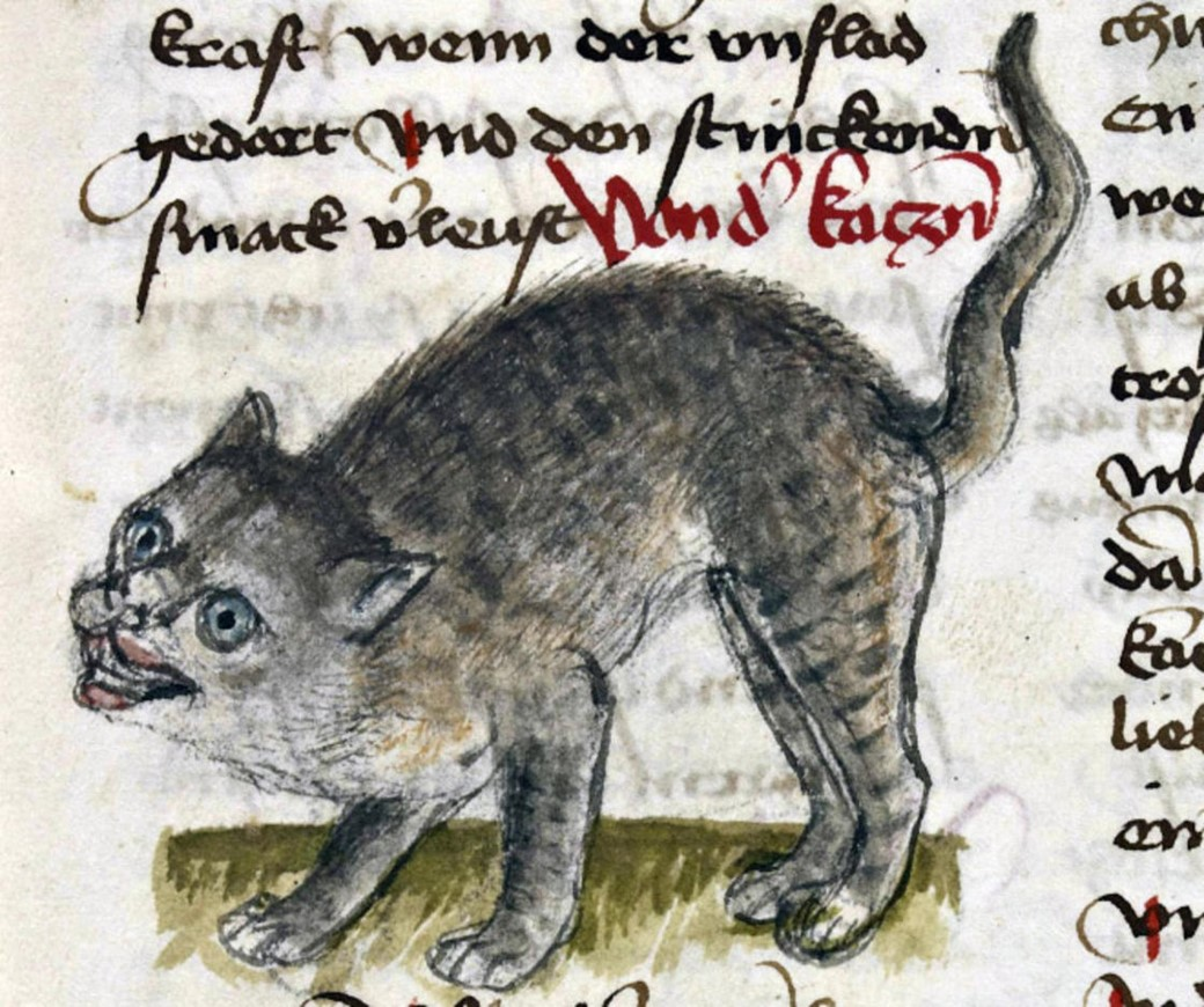 Gato arisco