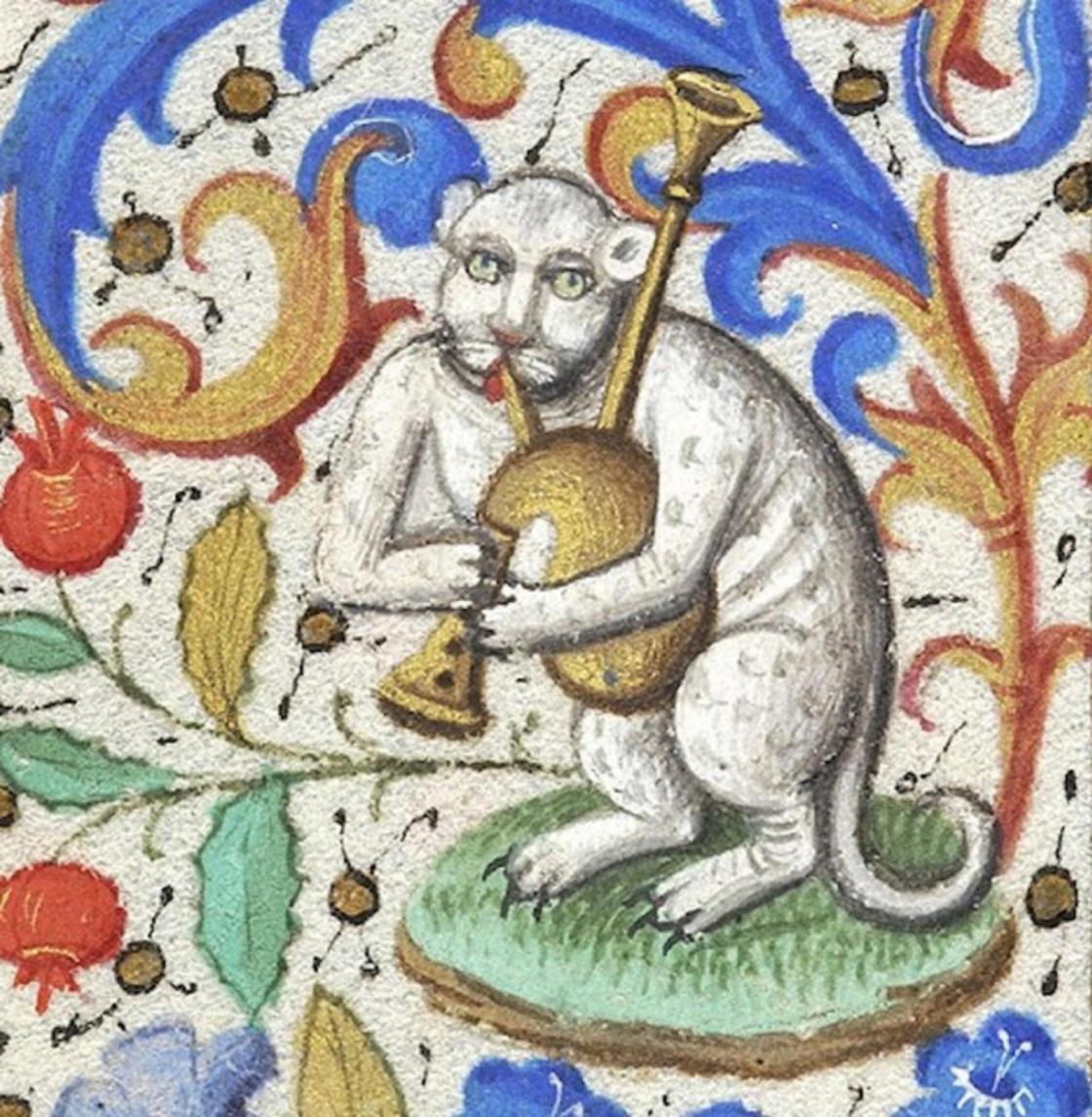 Gato com gaita de fole
