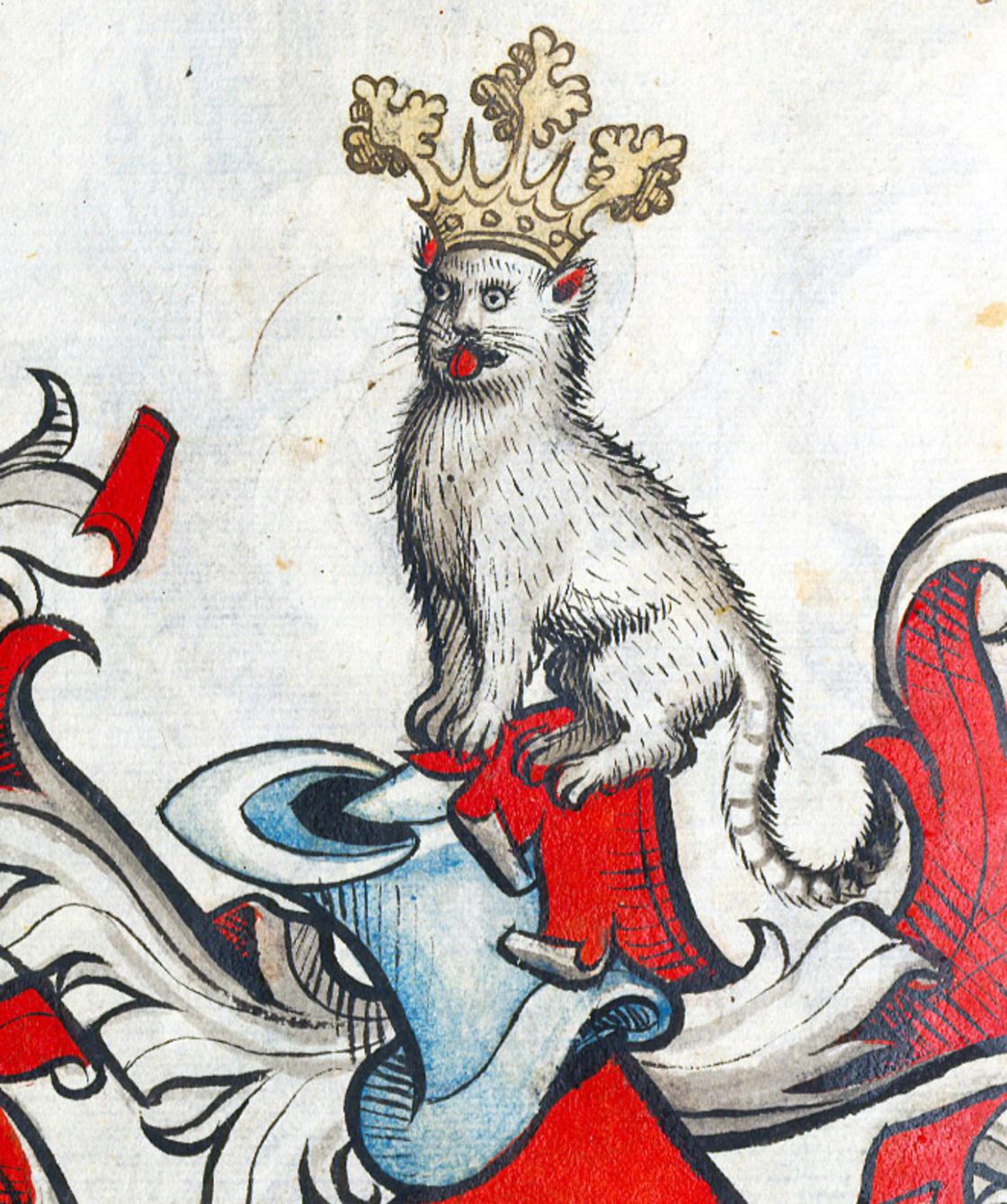 Gato coroado