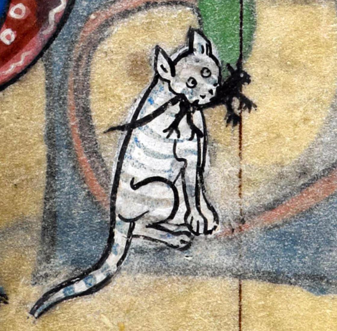 Isso não é um rato