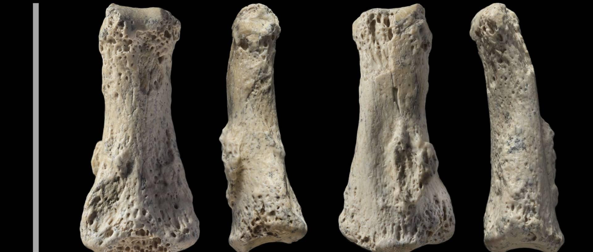 Antigo fóssil humano