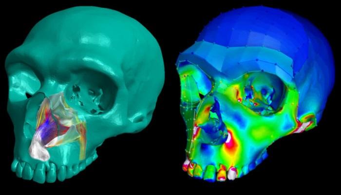 Modelo 3D do crânio