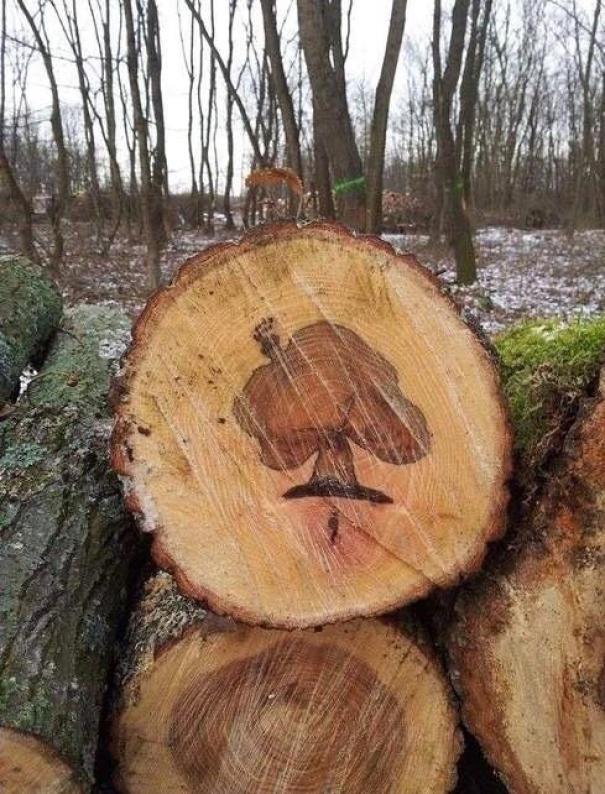 Árvore em tronco de árvore