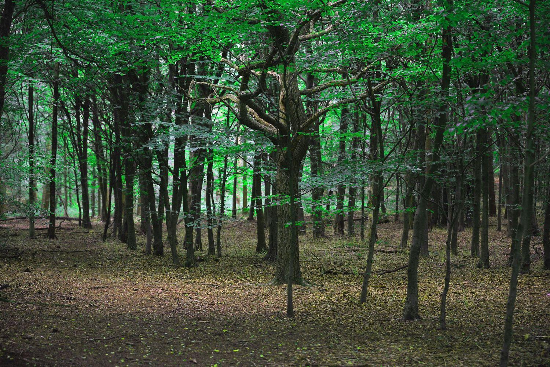 Floresta de Whippendell