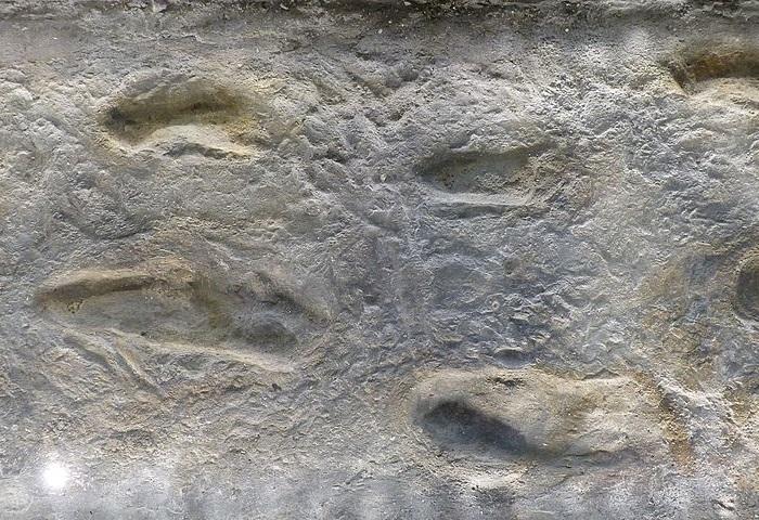 Pegadas de Laetoli
