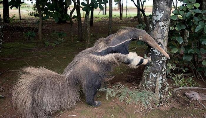 Foto do animal empalhado
