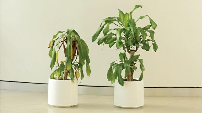 Diferença entre plantas