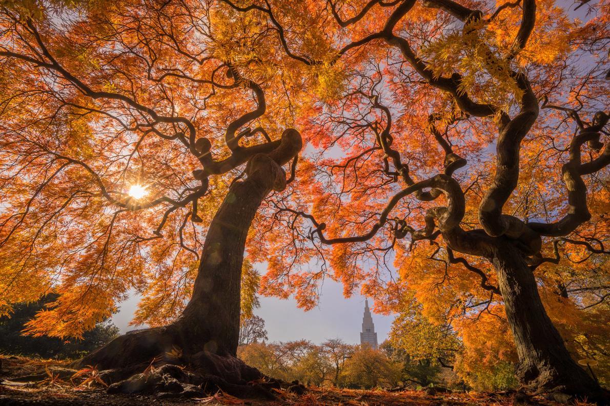 Árvores outonais