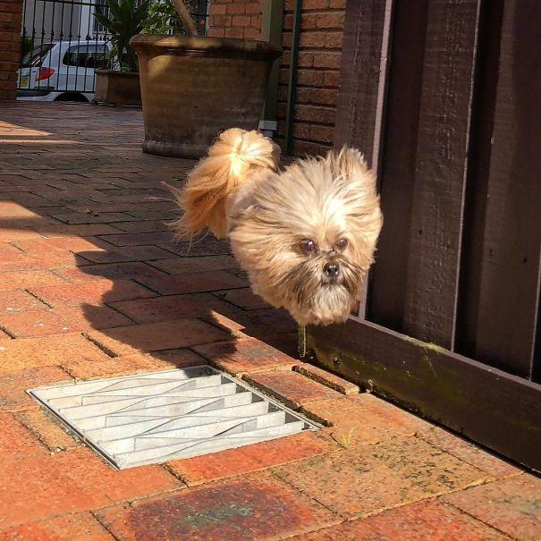Cachorro saltando
