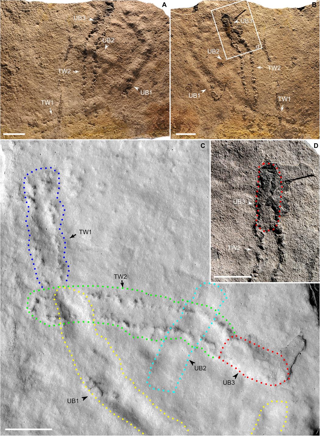 Pegadas mais antigas da Terra