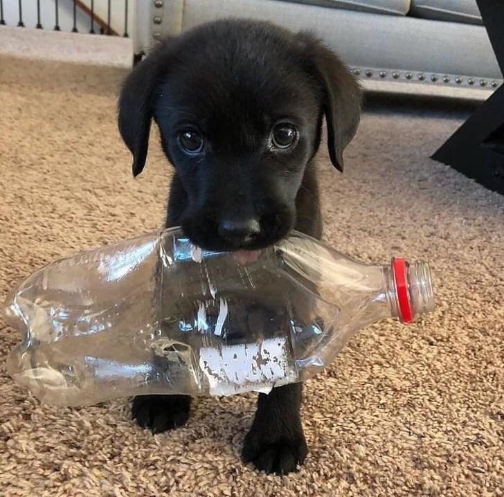 Cãozinho com a garrafa na boca