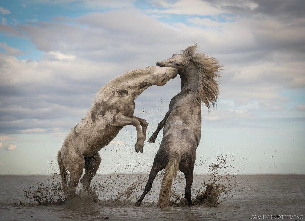 Cavalos brincando