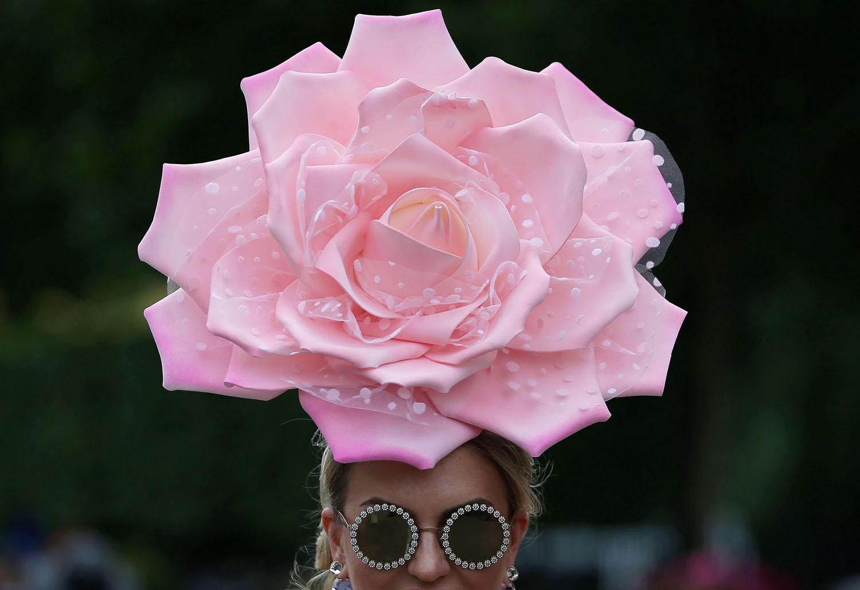 Rosa imensa