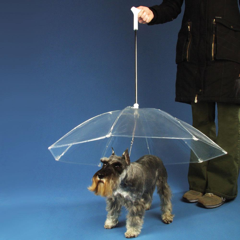 Guarda chuva canino