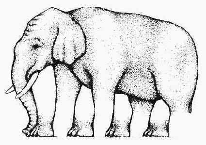 Elefante cheio de patas