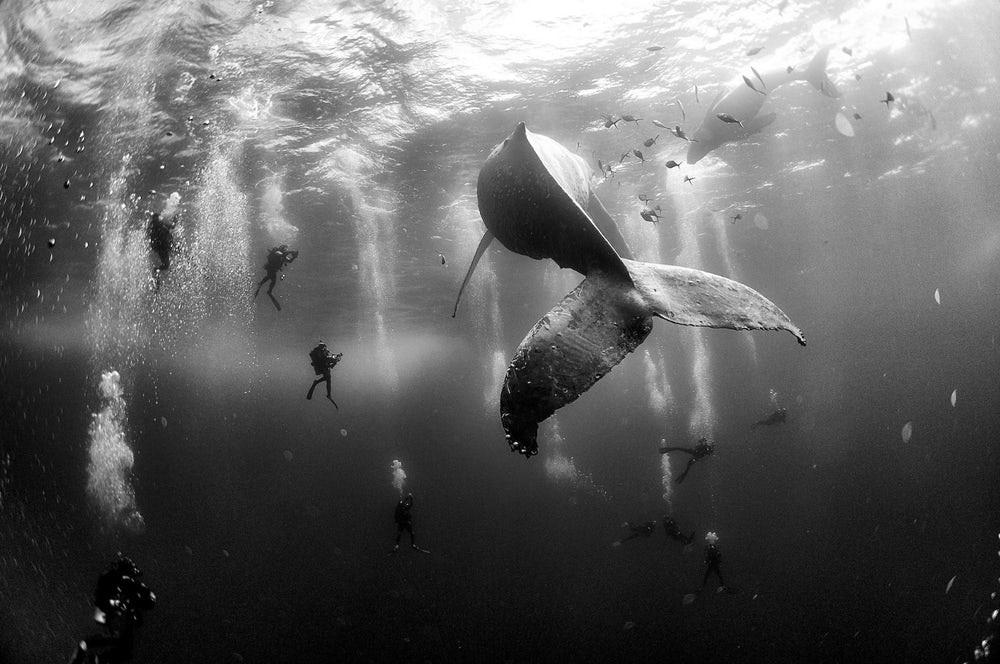 Mergulhadores e baleia