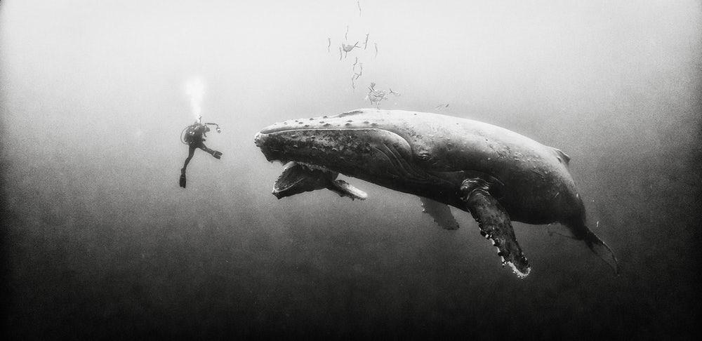 Nadando com baleias
