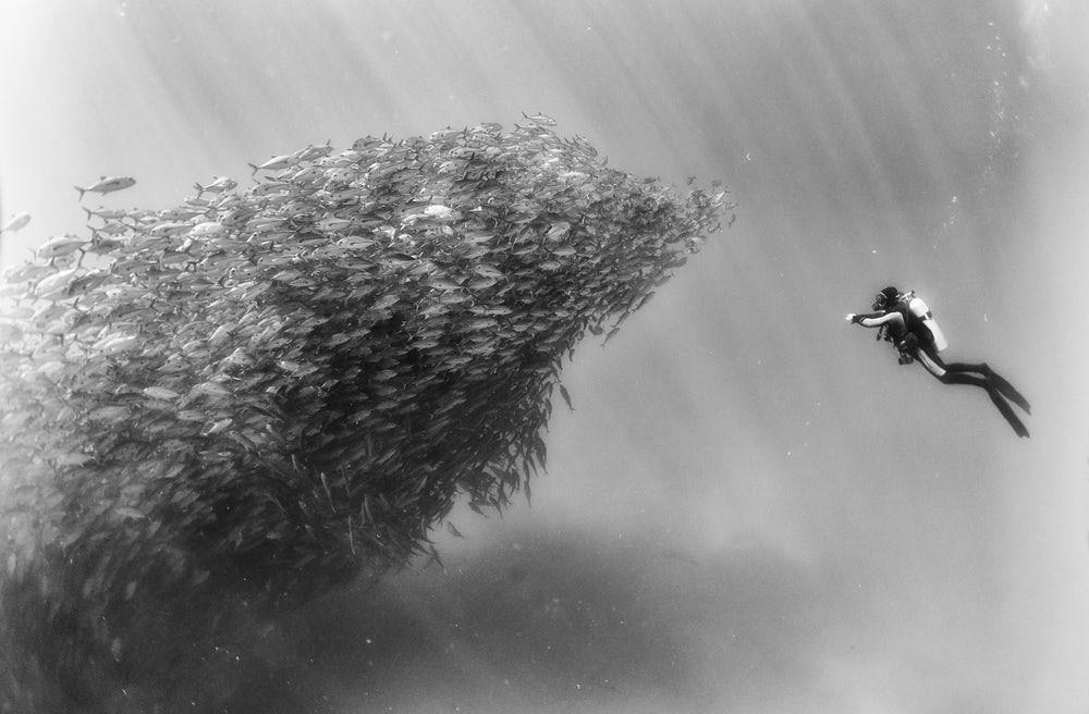 Nadando com um cardume