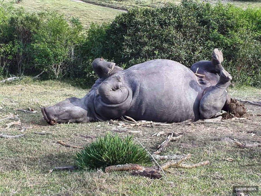 Rinocertonte