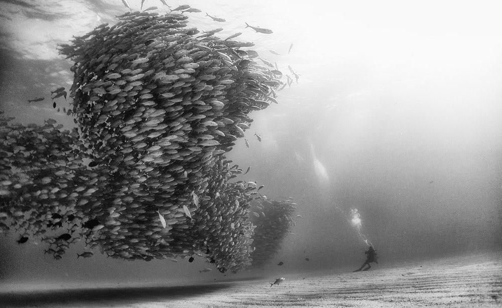 Tornado de peixes