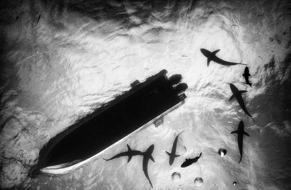 Tubarões ao redor de barco