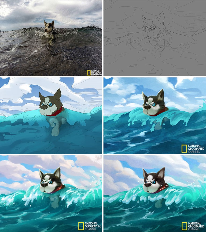 Lobinho surfista