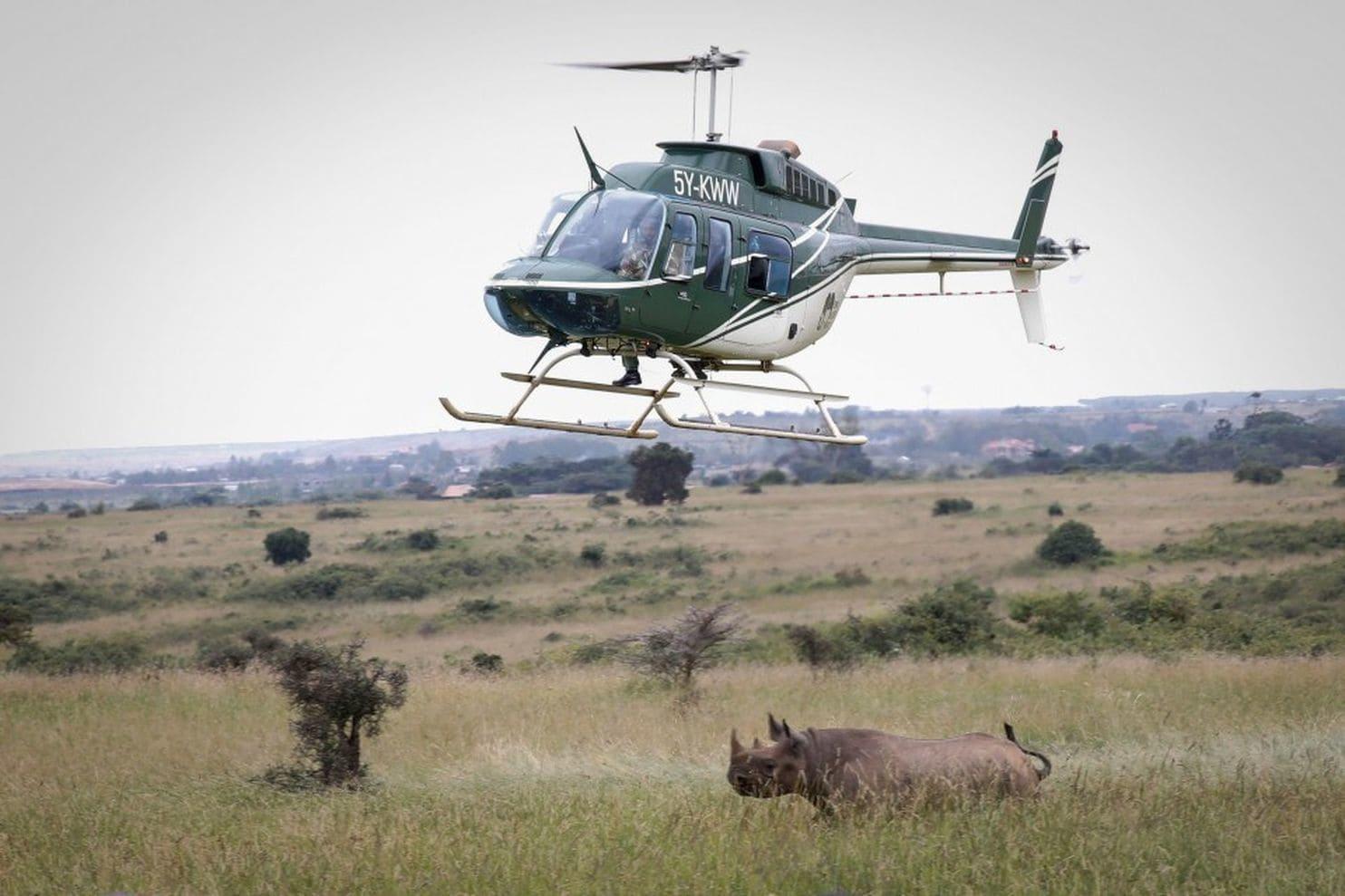 Rinoceronte na África