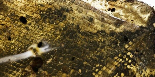 Detalhes de fóssil