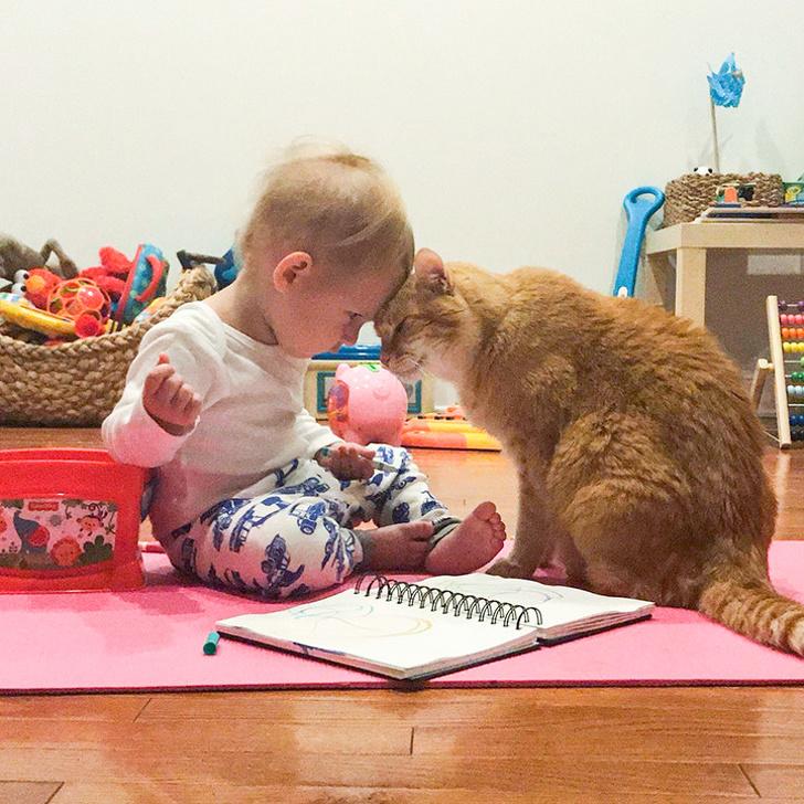bebe e gato